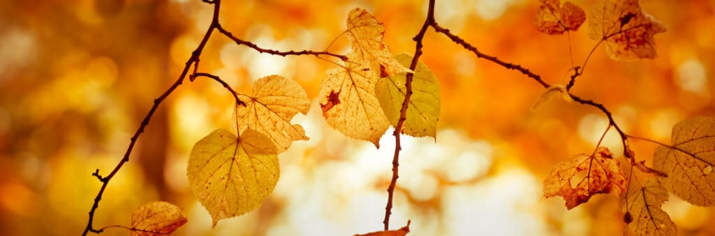 banner serie - autumn nature background with tree branch