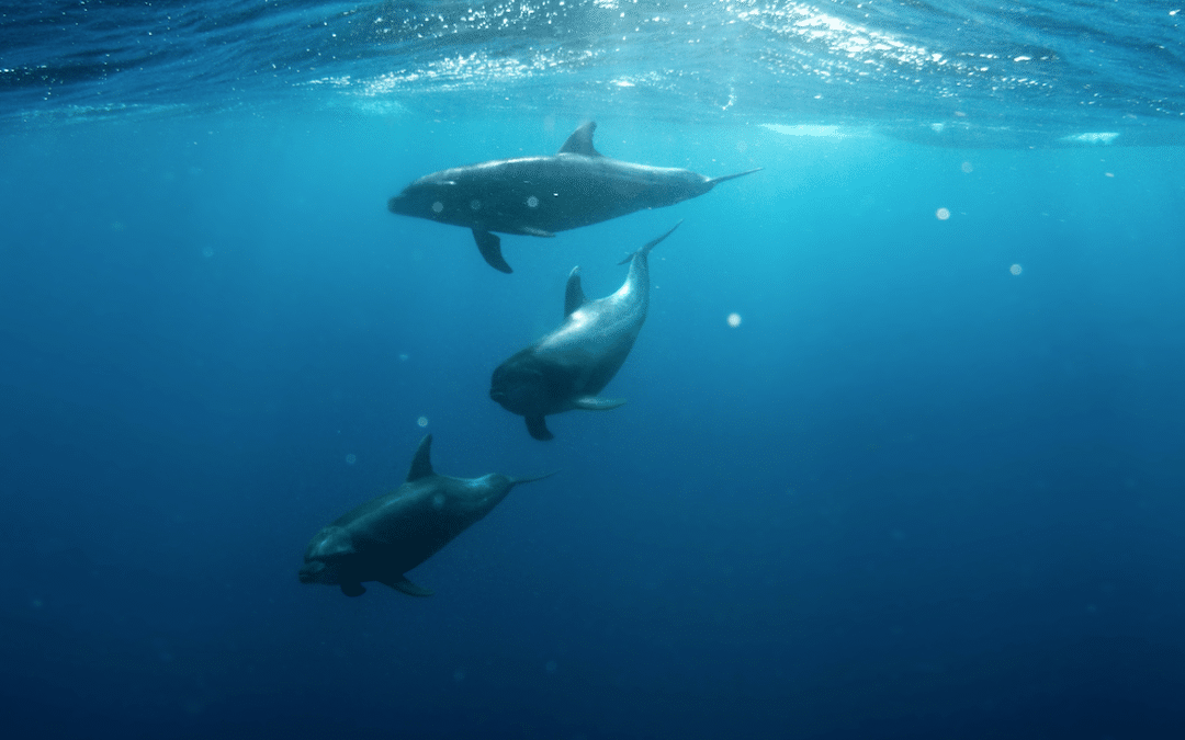 Find Your Inner Porpoise