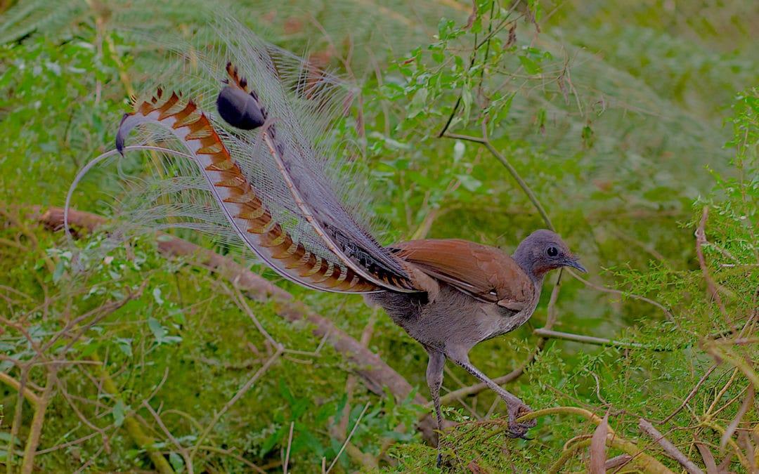 3 steps for handling environmental stress, bird by bird