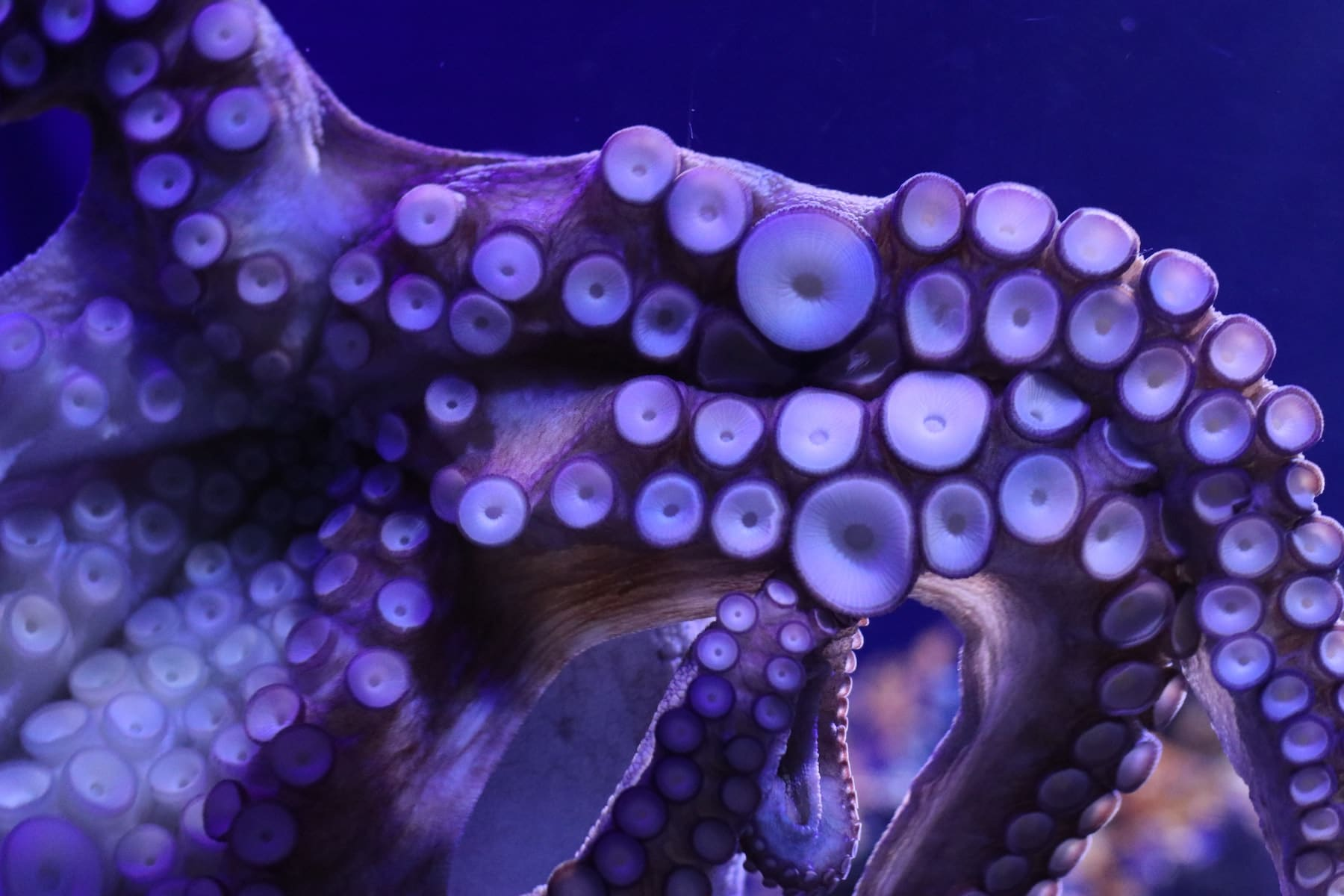Seven keys to deep learning from The Octopus Teacher